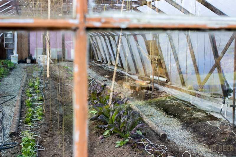 Persephone Brewing Greenhouse